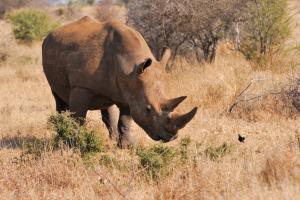 Sudafrica- Kruger