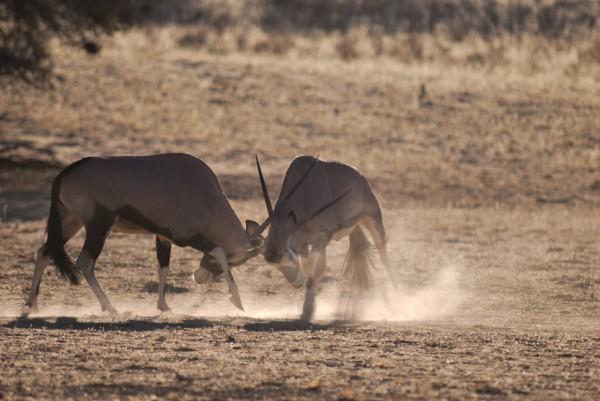 Sudafrica- Kalahari