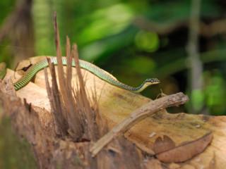 Foresta del Taman Negara => Malesia