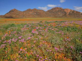 Goegap Nature Reserve => Sud Africa
