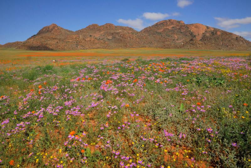 goegap-nature-reserve-sud-africa